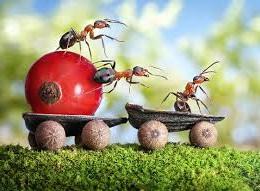 Как вывести тараканов, муравьев и т.д.