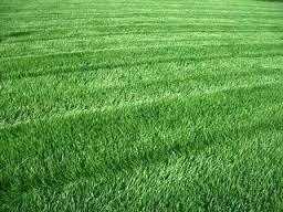 Искусственный газон как альтернатива