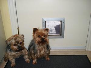 Установка двери для животных