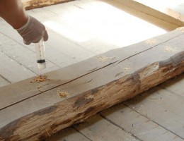 Как справиться с плесенью на материалах из дерева
