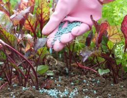 Отличный урожай с помощью качественных удобрений
