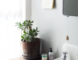 Разбогатеть при помощи растений: денежное дерево и не только