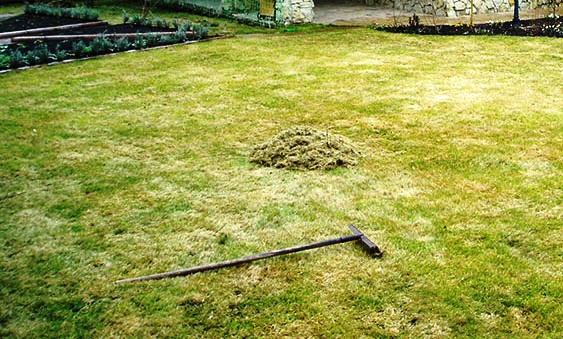 Как восстановить газон после Зимы?