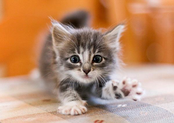 Как отучить кошку кусаться при играх