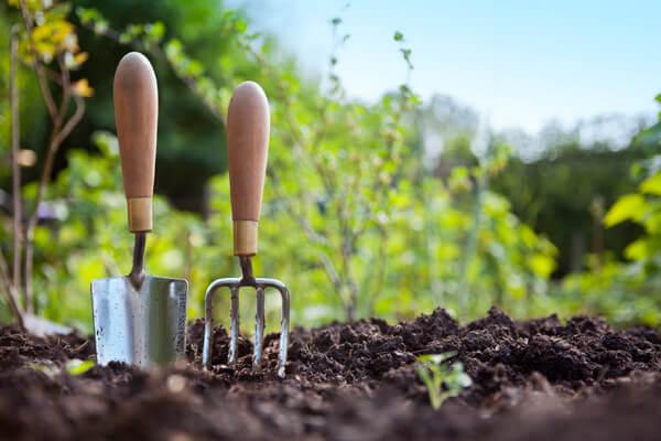Советы садоводу