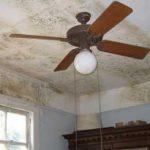 Причины появления плесени и грибка в частном доме и квартире