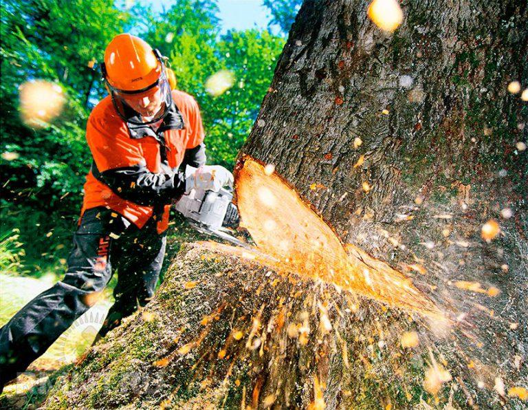Как правильно спилить дерево и завалить его в нужном направлении