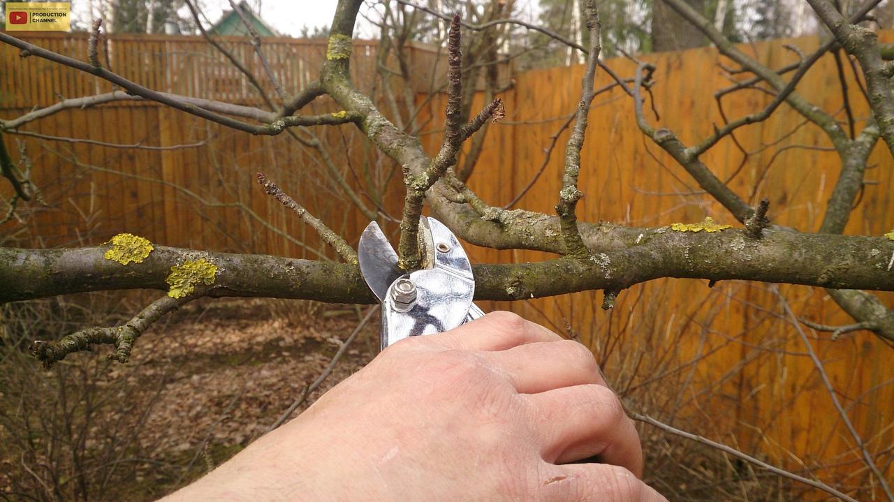 Принципы обрезки плодородных деревьев