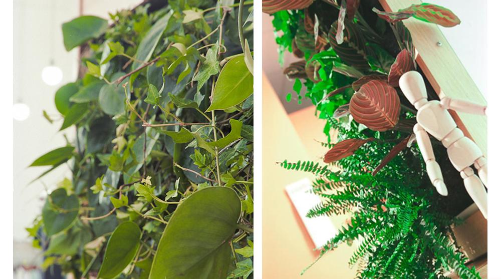 Сад, который растет прямо на вашей кухне