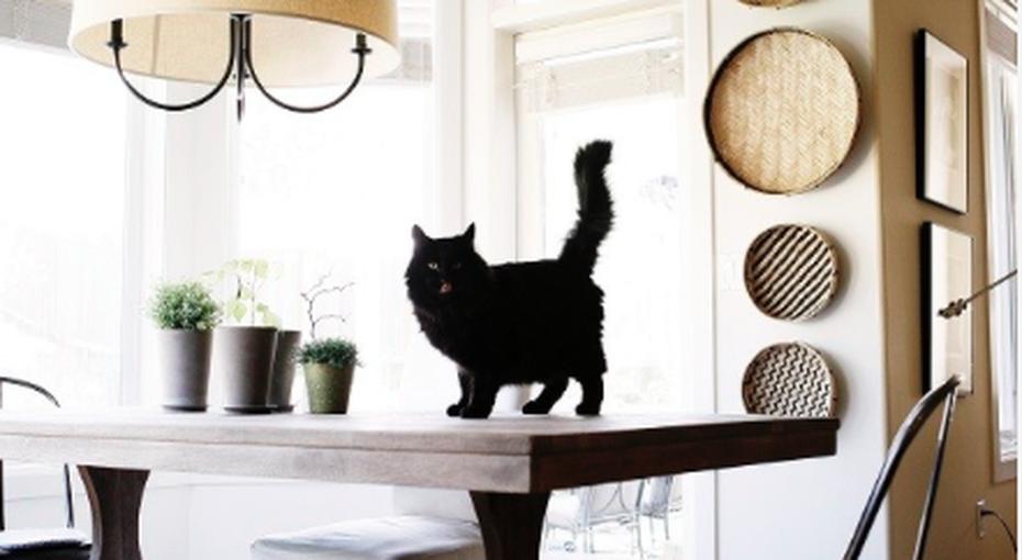 Кошки, грабли, зеркала и подковы: домашние суеверия из разных стран