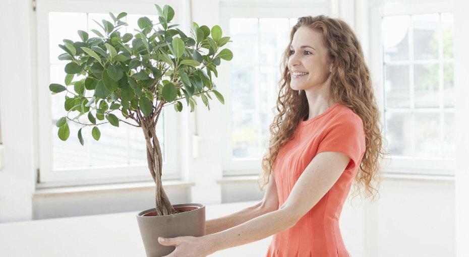 Причины завести дома больше комнатных растений