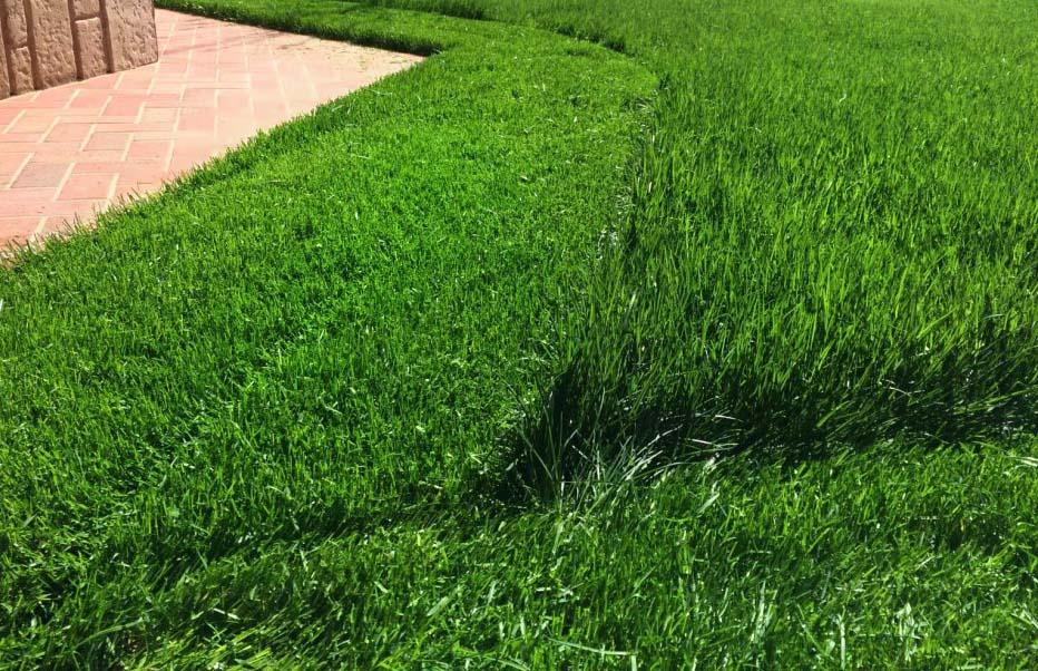 Жидкий газон самостоятельно