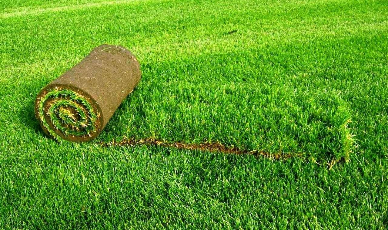 Виды рулонного газона для благоустройства территорий