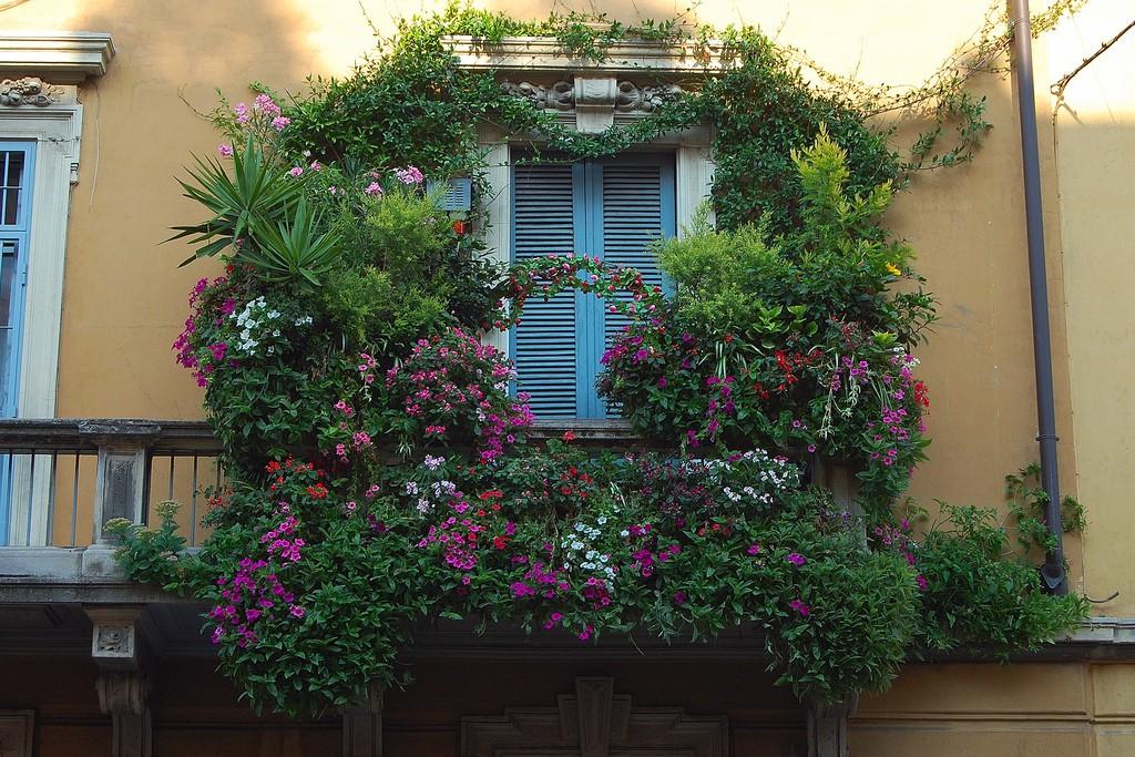 Круглогодичные растения для открытых балконов