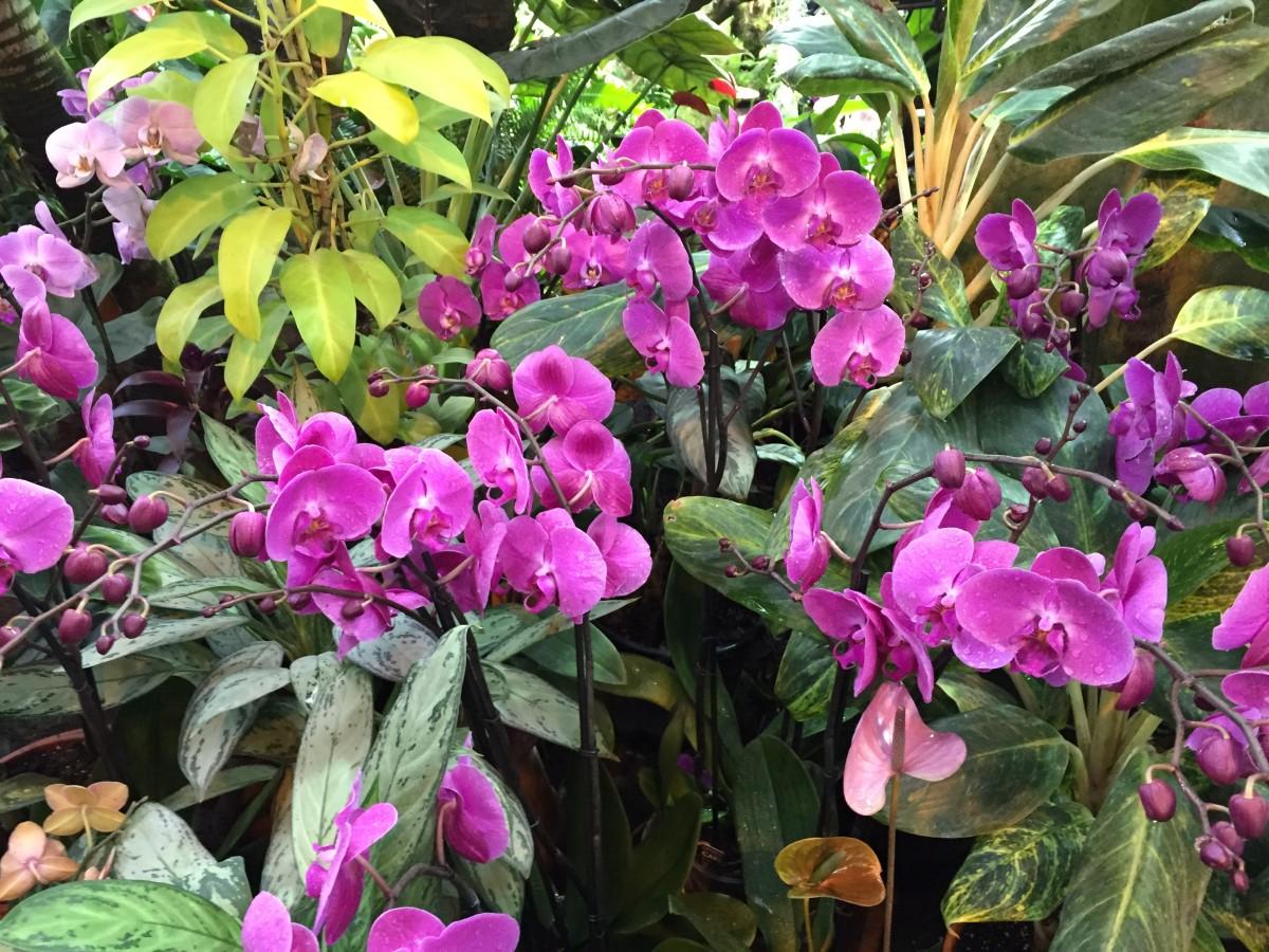 Как правильно ухаживать за орхидеями: ответы для «чайников»