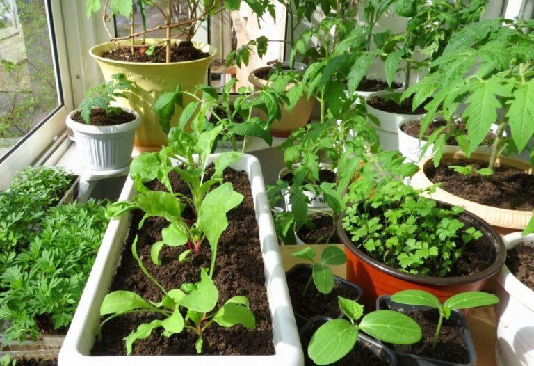 Выращиваем фрукты и овощи в домашних условиях
