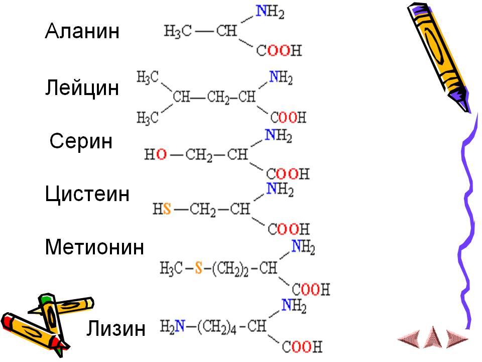 Применение аминокислоты Аланин